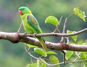 papagayo_verde-2641