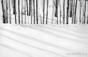 Abbas-Kiarostami_-_Trees_in_snow