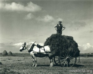 Paul_Strand_hay is for horses