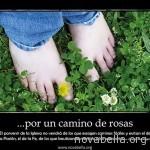 por un camino de rosas